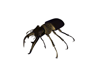 nature Stag beetle 3D print model