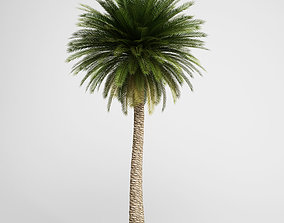 CGAxis Canary Island Date Palm 11 3D