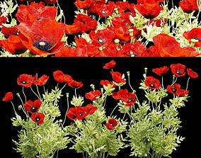 Field poppy 3D PBR