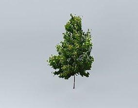3D model Japanese Oak