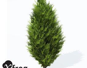 XfrogPlants Savin Juniper 3D model