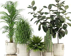 3D model Plants collection 334