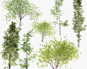 Trees Pack 3D model animated PBR