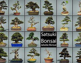 3D model 23 Bonsai Tree Collection