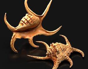 3D invertebrate Harpago chiragra