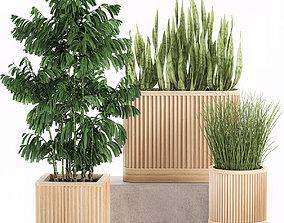 Decorative plants in a bamboo flowerpots 799 3D