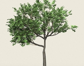 Game Ready Forest Tree 02 3D model