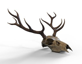 Deer skull with horns 3D asset VR / AR ready
