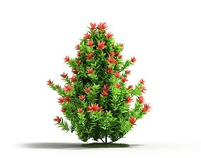 Tall Flowering Plant 3D
