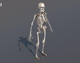 3D model rigged Skeleton