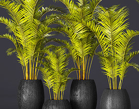 palm collection 3 3D model