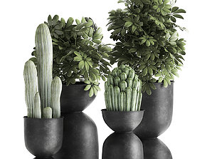 3D Houseplants in a pot for the interior 888