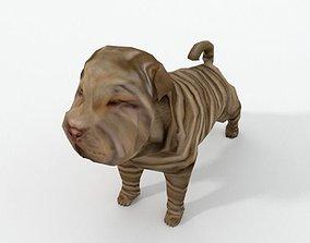 3D model Shar Pei