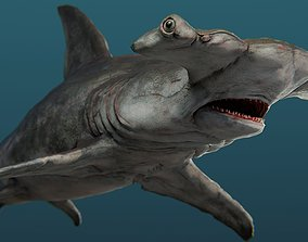 Hammerhead shark detailed rigged 3d model rigged