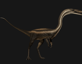Coelophysis 3D model animated low-poly