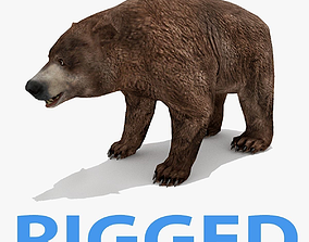 3D asset Bear - Rigged - Animated