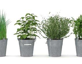 Herbs 3D