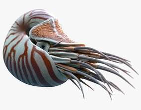 Nautilus belauensis 3D asset