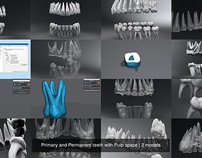 Primary and Permanent teeth with Pulp space 3D model