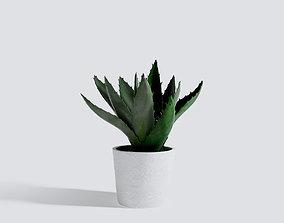 3D Small Aloe Capitata