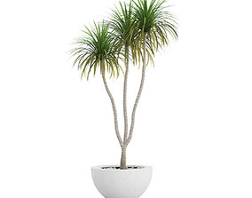 3D model Potted Palm TreePotted Palm Tree