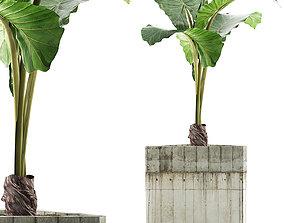 Plants Collection 83 3D model vase