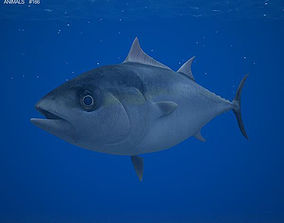 Atlantic Bluefin Tuna 3D
