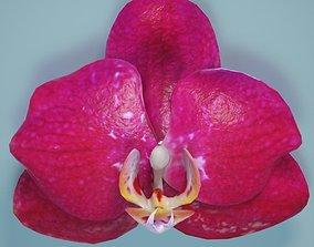 Orchid 3D asset low-poly