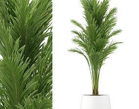 Plants collection 247 3D model