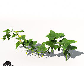 3D XfrogPlants Cucumber