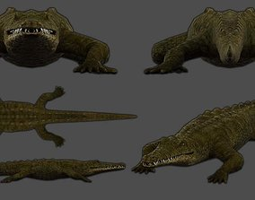 3D model rigged crocodile