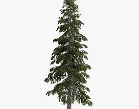 3D model fir-tree