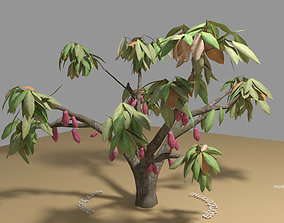 3D Cacao Tree type CCN51 with Fruit