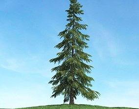 Tall Conifer Tree 3D model