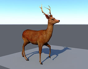 Walking cycle animated low poly model of a deer 3D asset