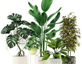 3D Plants collection 117
