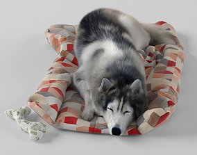 3D model Sleeping Husky Dog