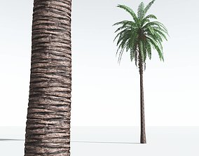 EVERYPlant Date Palm 11 --16 Models-- 3D