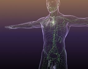 3D model Lymphatic System in Human Body
