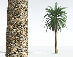 EVERYPlant Date Palm 02 --16 Models-- 3D