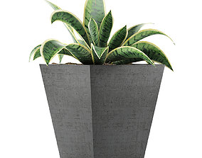 Plants Collection 60 in 3D model