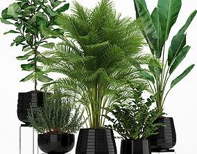 3D Plants collection 180