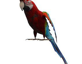 Parrot Animated 3D asset