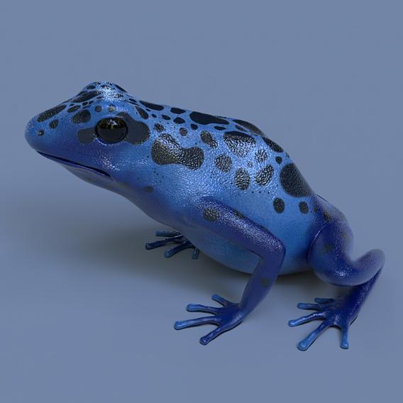 Blue poison dart frog - Dendrobates azureus