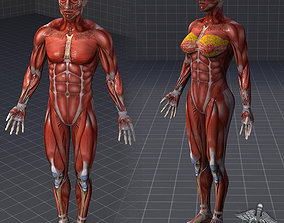 3D Collection - Human Male and Female Muscular System