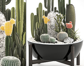Collection of Exotic Cactus Plants 6 3D model