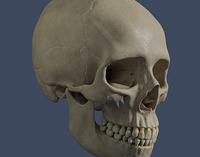 Human Skull - Mid Poly and High Poly 3D asset low-poly