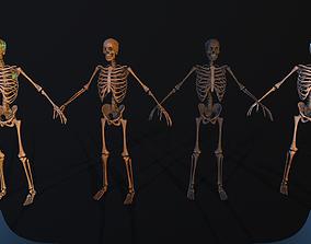 Sceleton 3D model rigged