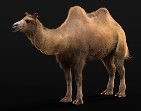 Bactrian Camel Rigged Hairs 3D asset VR / AR ready
