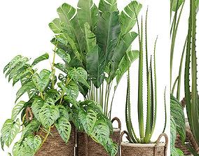 3D model Plants collection 446
